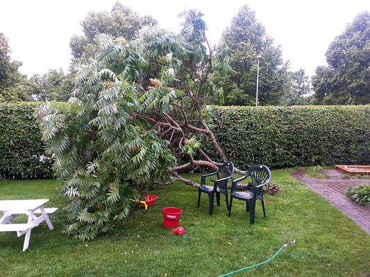 130710_tree_down
